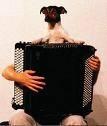 accordeon.jpg